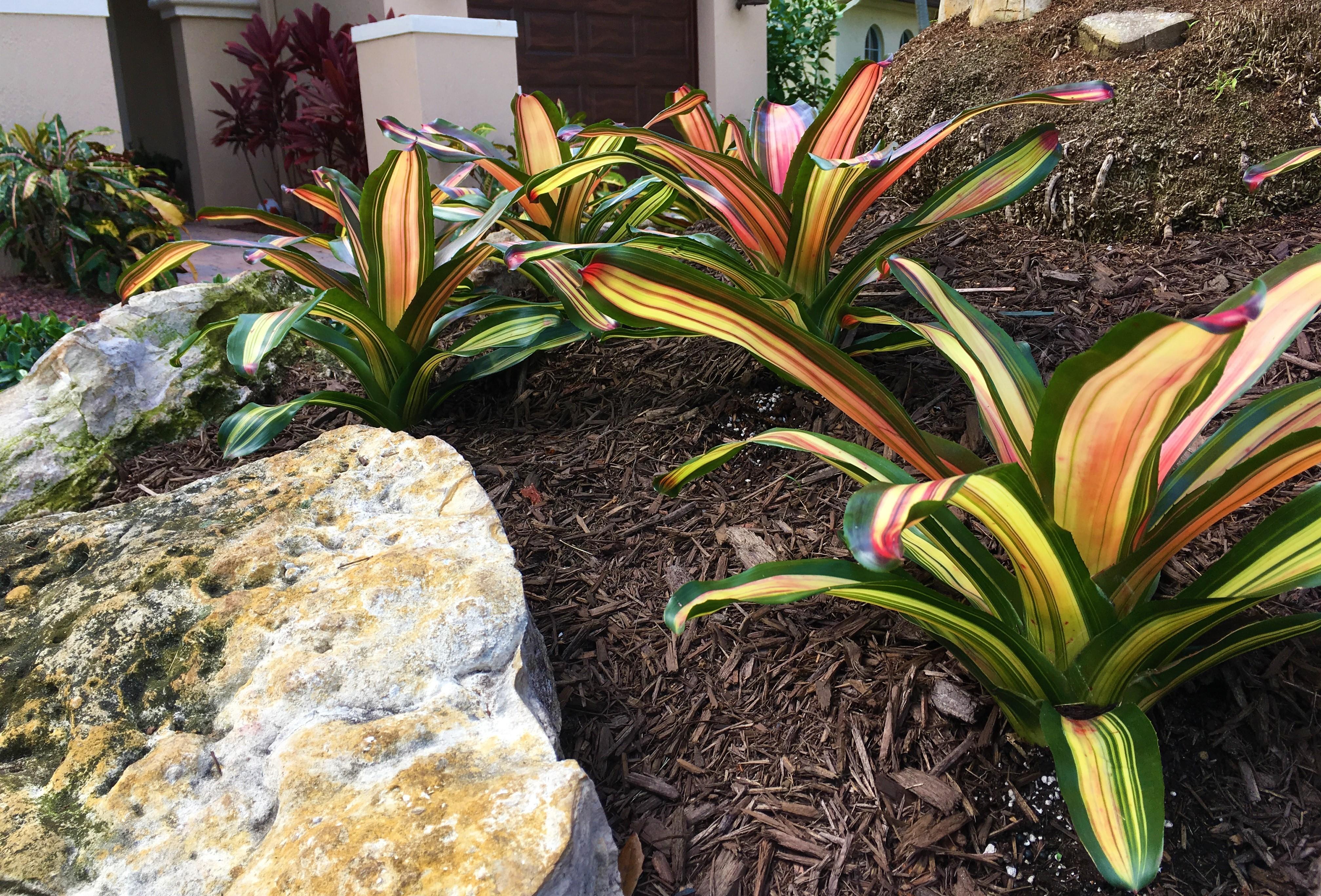 Landscaping Palm Beach Gardens