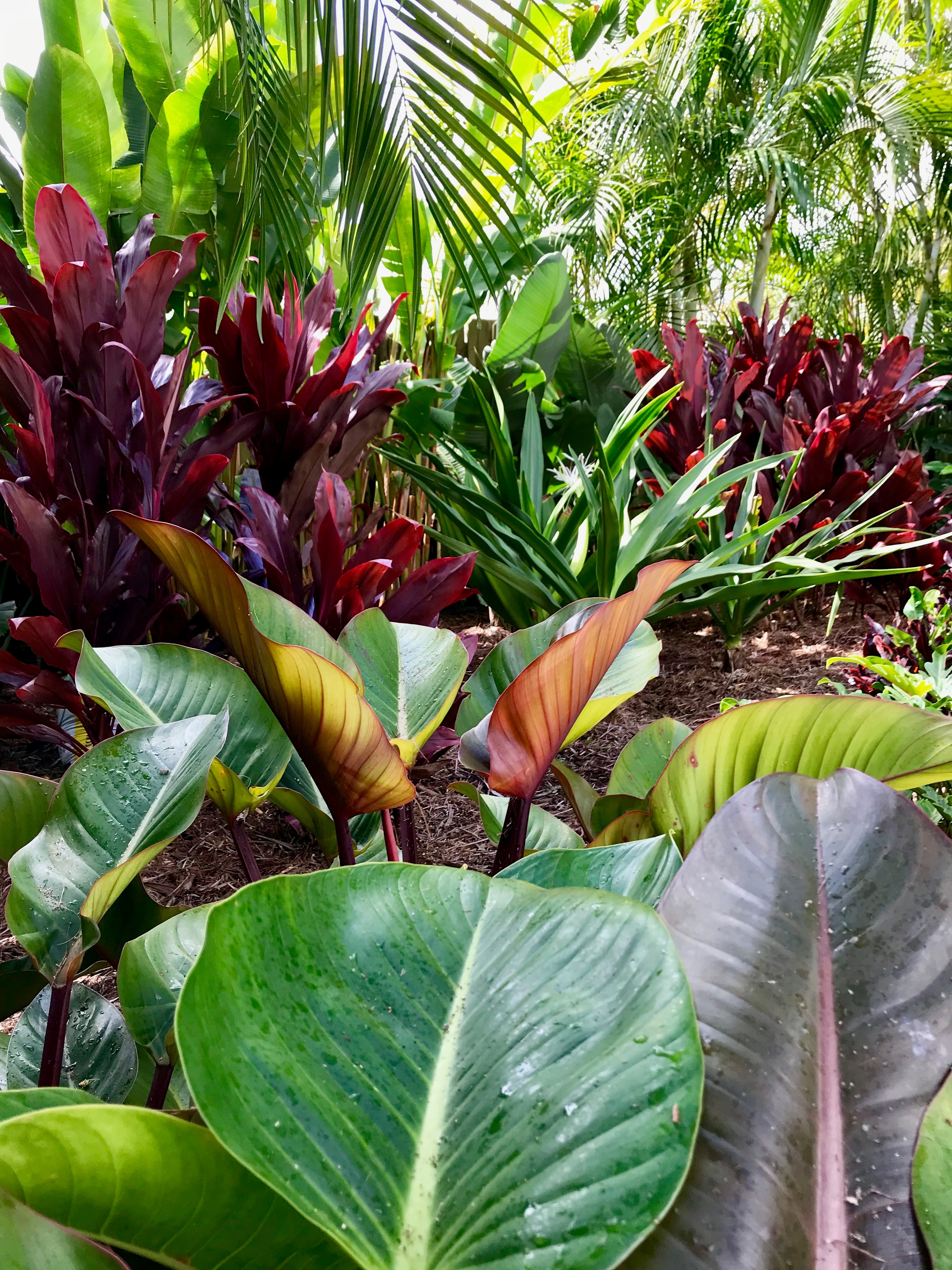 North Palm Beach Landscaping