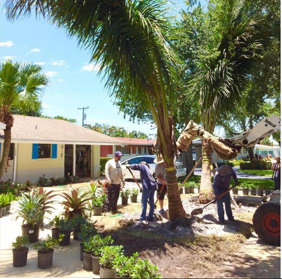 Landscape Design, North Palm Beach