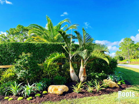 Palm Beach Gardens Landscape Designer Tropical Modern