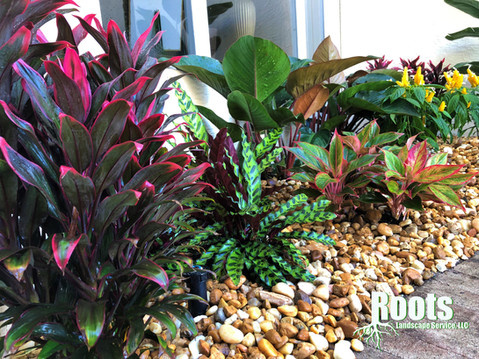 Palm Beach Gardens Landscape Design Mirasol