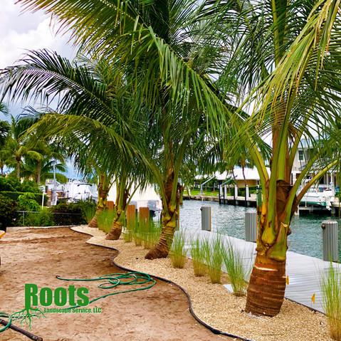 Singer Island Landscape Design Tropical Modern