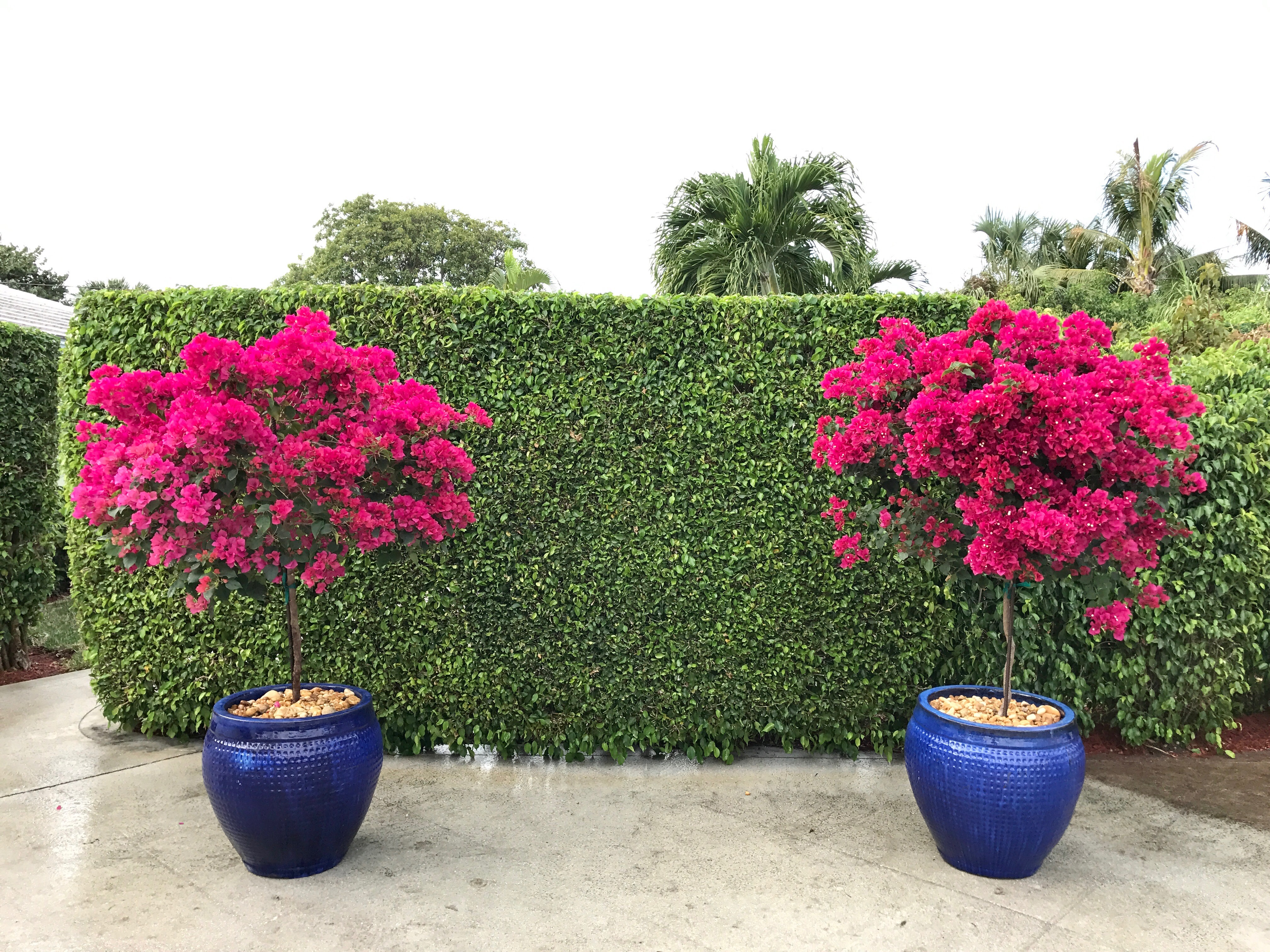 Landscape Design, North Palm Beach