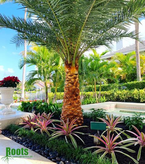 Jupiter, FL Admirals Cove Landscape Design Modern Tropical
