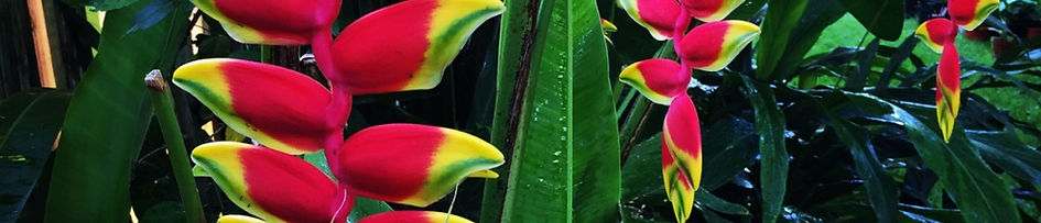 Landscape Desig, North Palm Beach