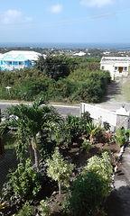 Nevis Photo #2.jpg