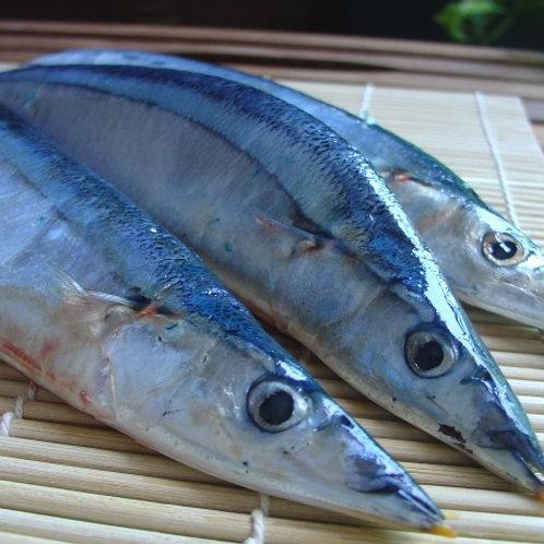 《嘉豐》鮮凍秋刀魚