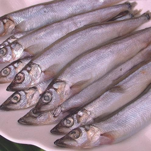 《嘉豐》加拿大柳葉魚