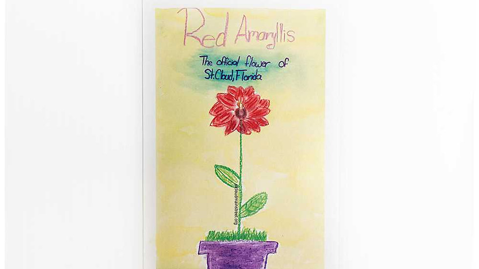 Brooke's Amaryllis Postcard