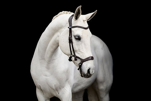 Pony Pioneer