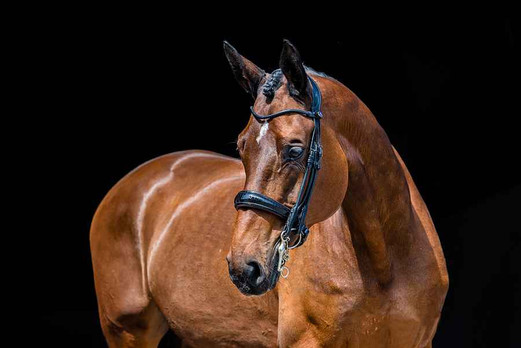 All In Double Bridle