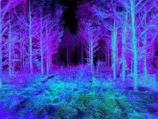 Pesquisadores desenvolvem drone autônomo para conservação de florestas