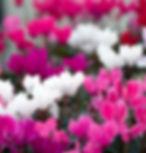 Autumn Image.jpg