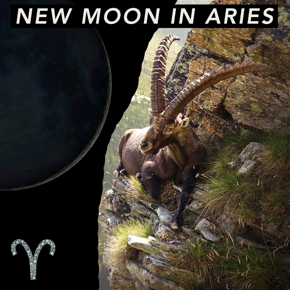 New Moon in Aries 2020 - Energetic Principles