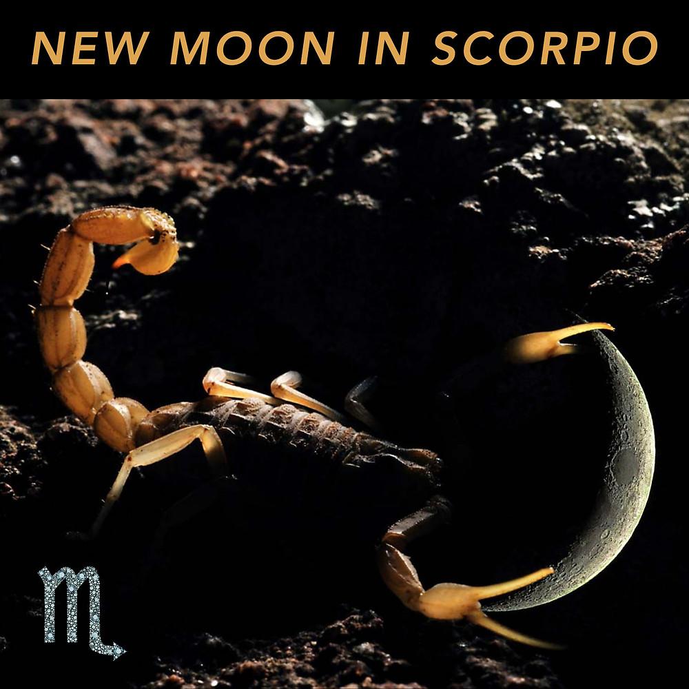 New Moon in Scorpio 2019 - Energetic Principles