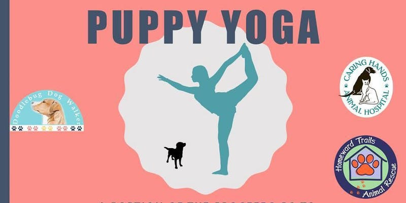 Doodlebug Puppy Yoga - Charity Fundraiser