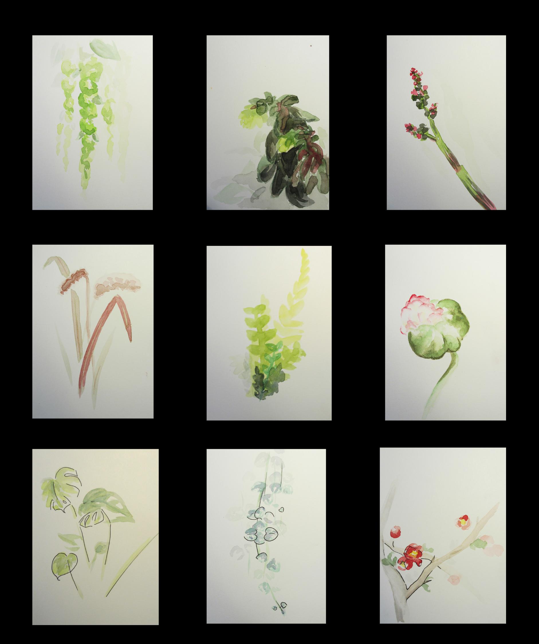 Aquarellserie Pflanzen