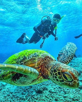 scuba-diving-with-turtle-999XYV3.jpg