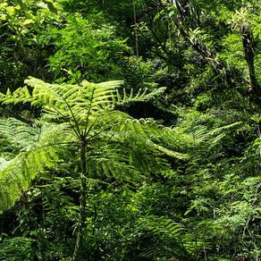 O Desenvolvimento Sustentável como alternativa contra a perda da biodiversidade