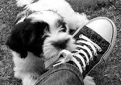 dog walker, dog boarding, pet care, cat care, dog walker Tarrytown, dog walker Riverdale, dog walker westchester, dog walker dobbs ferry, dog walker fort lauderdale, dog walker 33308, dog walker 33316, dog walker las olas, dog walker ft lauderdale