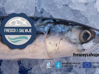 """Arranca en pescaderías de Vigo la Marca """"Fresco & Salvaje"""""""