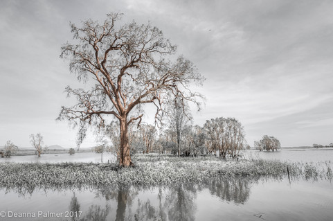 Flood plains Proserpine.jpg