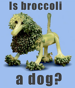 A meme showing a tiny dog made from broccoli asking if broccoli is a dog