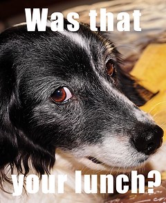 Cute dog looking guilty with words saying was that your lunch?