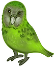 A Kakapo. A New Zealand green flightless parrot