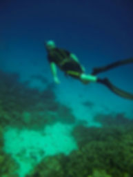 Freediving Training Course with Everblue Freediving