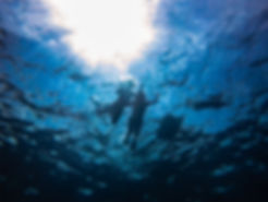 Freediving with Everblue Freediving School
