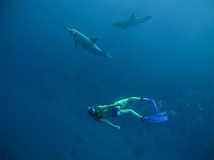 Freediving with Wild Dolphins and Everblue Freediving