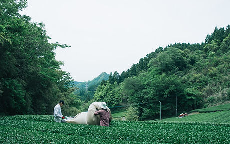 chiyonoen_background02.jpg