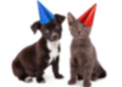 DogandCatPartyhats CROP.jpg