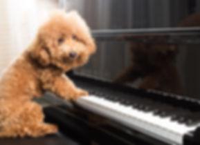 Piano Dog.jpg