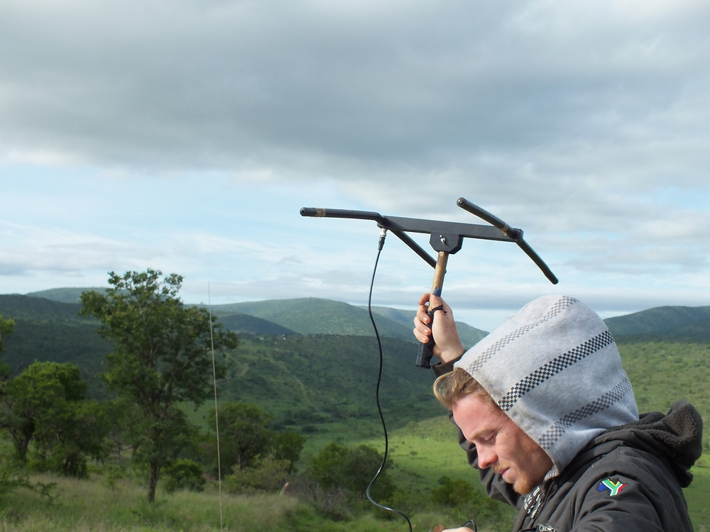 A fieldworker holds up an antenna to radio-track animals