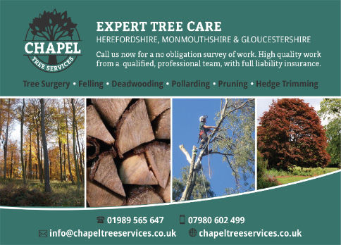 Chapel Tree Services