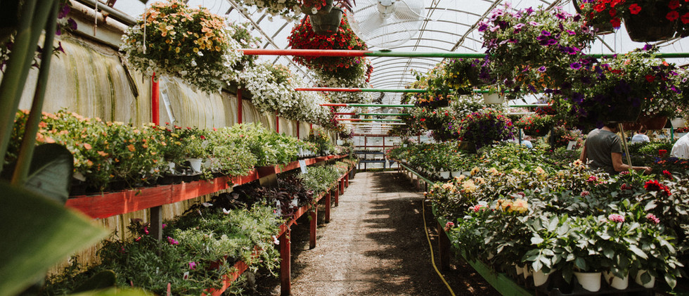 greenhouseback.jpg