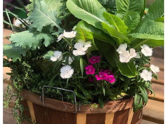 Basket garden_edited.jpg