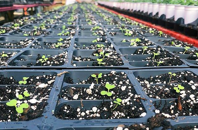 #greenhouse 2.6.jpg