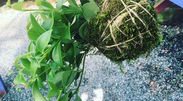 Crazy for Kokedama String Gardens.jpg