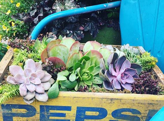 Loved repurposing wedding succulents int