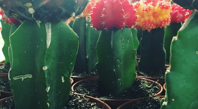 Just in! #colortops #cacti •_•_•_•_#braw
