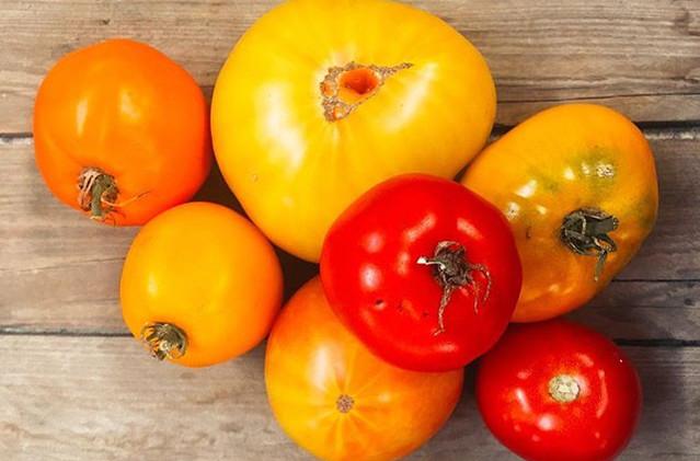 Fresh tomatoes taking on autumn hues.jpg