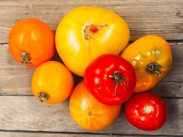 Fresh tomatoes taking on autumn hues.jpg