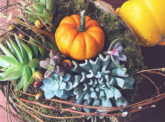 Succulent centerpiece as sweet as pumpki