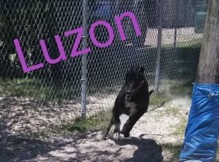 Luzon.jpg