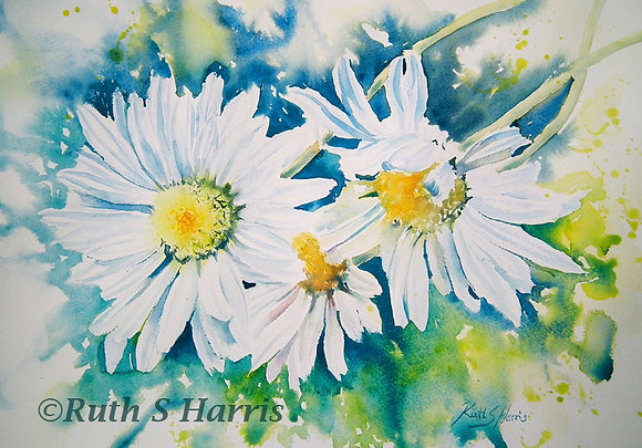 Oxeye Daisies original watercolour painting