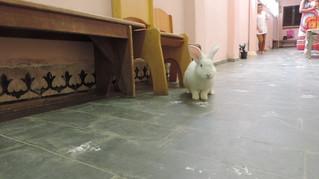 Visita do coelho