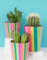 paper pots.jpg